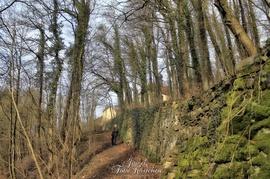 Fototraining Wald und Wasser